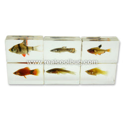 TE1001<br />Tropical Fishes Collection
