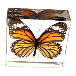 TE28<br />Common Tiger Butterfly<br />