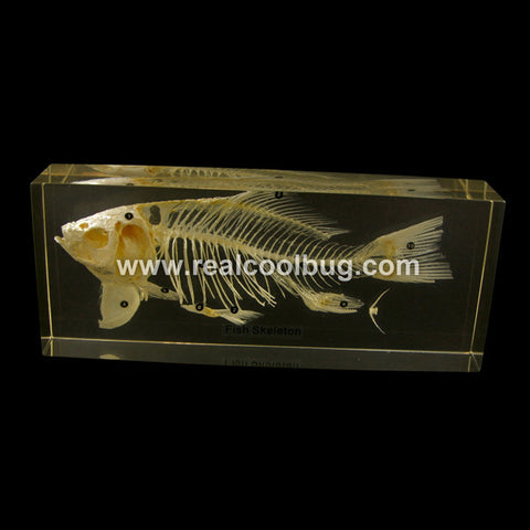 TE36<br />Fish Skeleton<br />