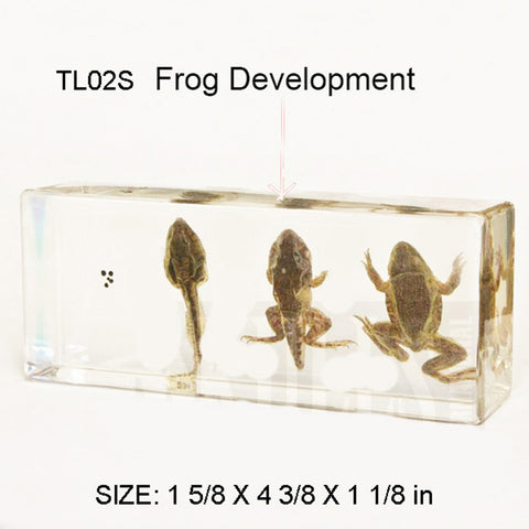 TL02S<br/>Frog Life Cycle Small
