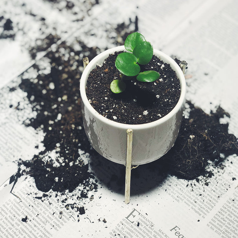 What is the Difference Between Potting Soil and Potting Mix?