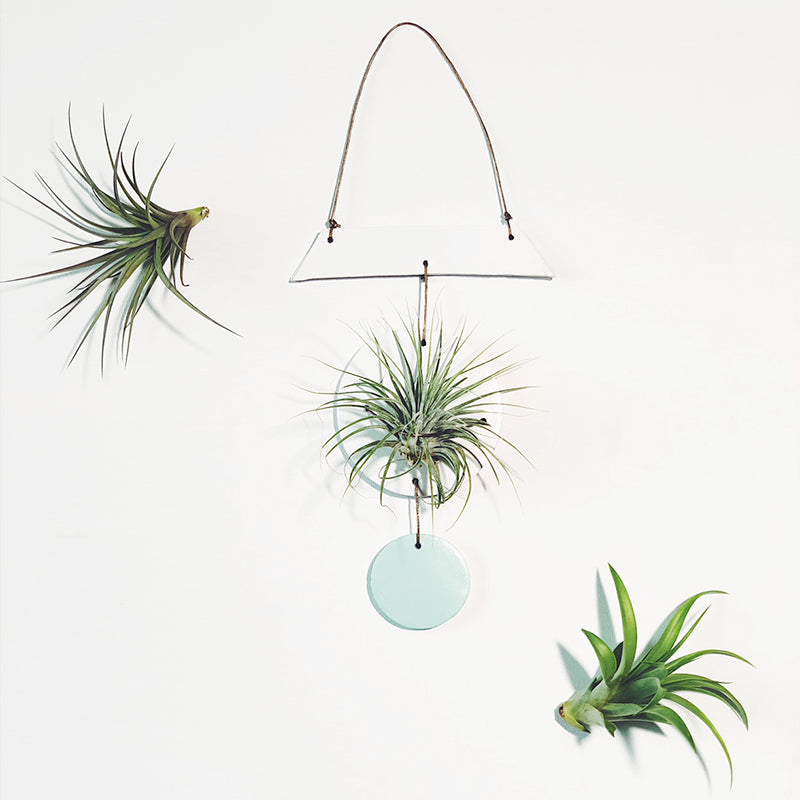 Hanging Air Plant Holder / Wall Hanging / Boho Wall Decor