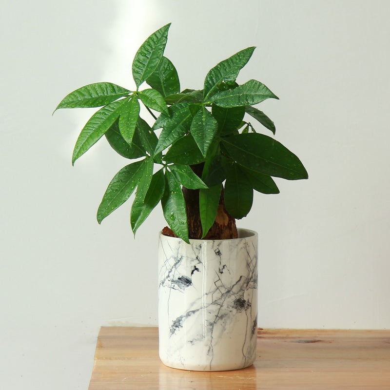 Marbleized Ceramic Planter