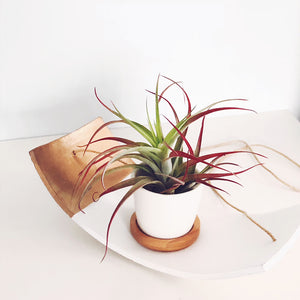 White Ceramic Hanging Plant Holder / Air Plant Holder / Plant Hanger