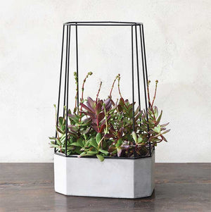 Wide Cement Planter