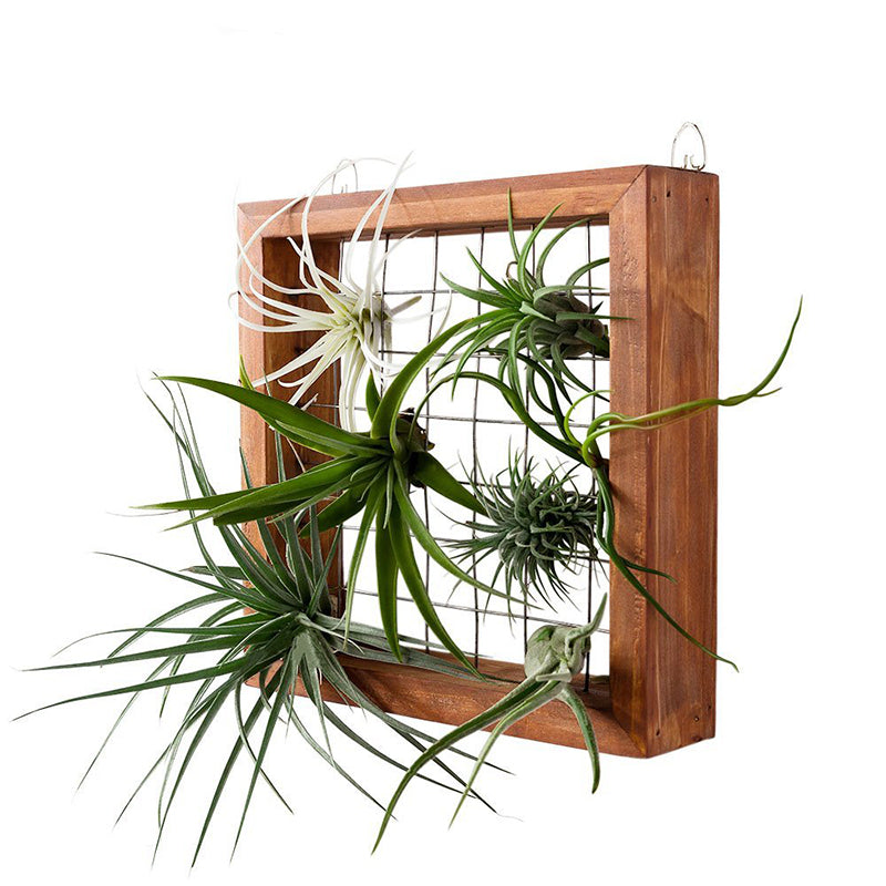 Wood Wall Frame Air Plant Display