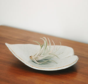 Hosta Leaf Dish / Air Plant Holder / Fruit Dish / Decorative Dish / Table Decor
