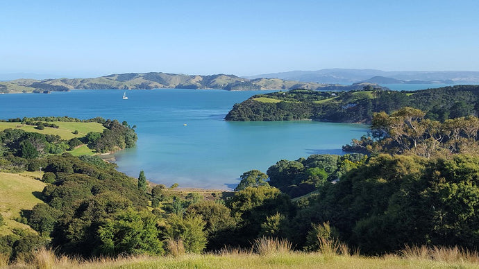 Roundtrip Ferry to Waiheke Island (included) - ExistTravels