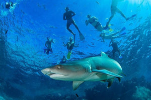 OPTIONAL ADD-ON  - Fiji -Snorkel with Sharks - ExistTravels