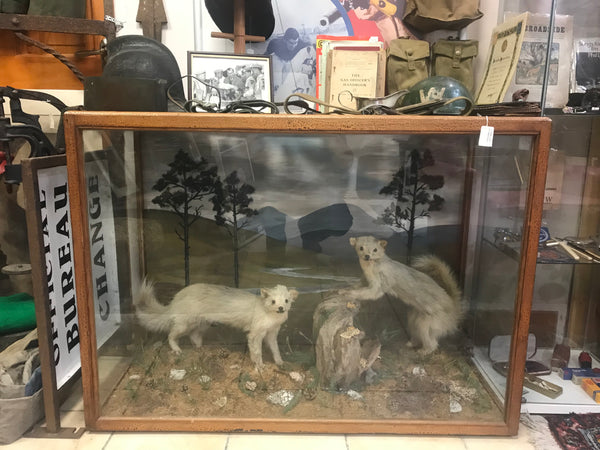 Large Taxidermy Display case - stoats