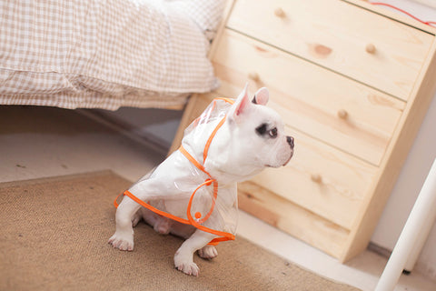 Image of Dog Rain Coat