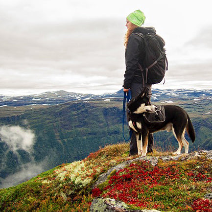 6 Things to Pack When Hiking with Your Dog This Fall