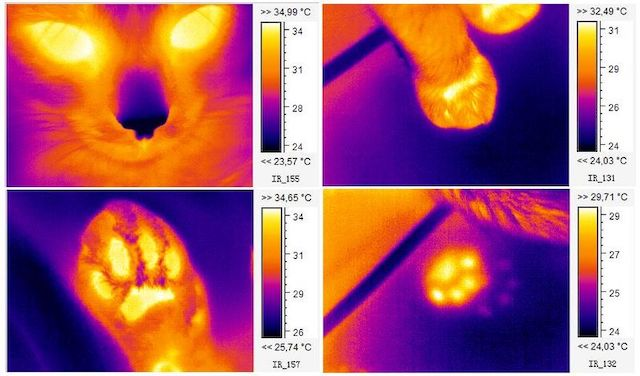 Thermal cat