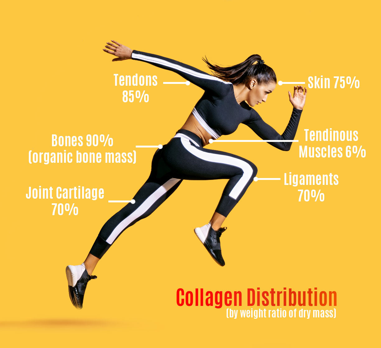 collagen distribution