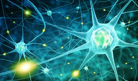 CBD may contain neuroprotectant qualities.