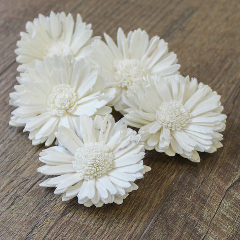"Daisy - 12 Pack - 3"" - Wood Flowers Co."