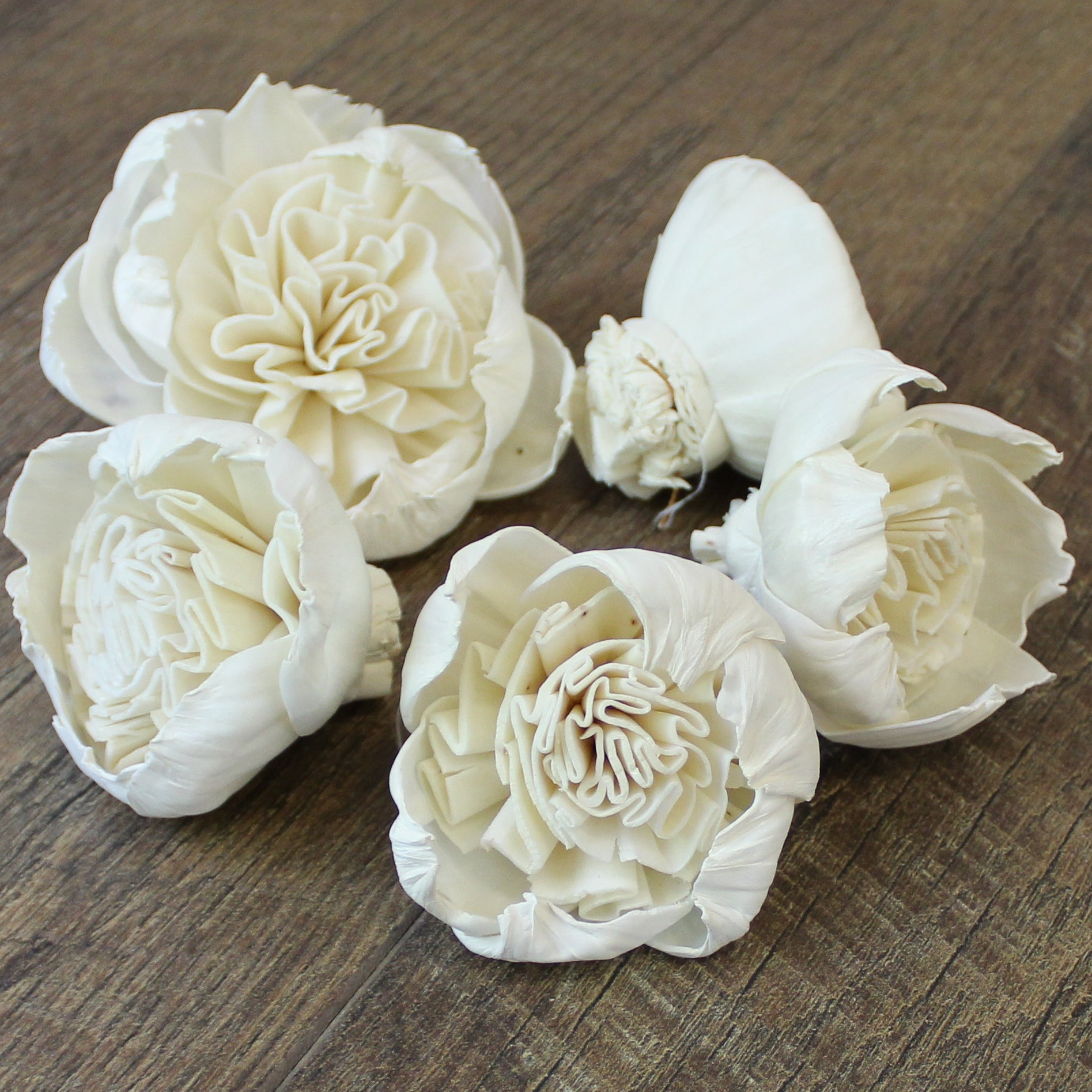 "Garden Rose Special - 2.5"" - Wood Flowers Co."