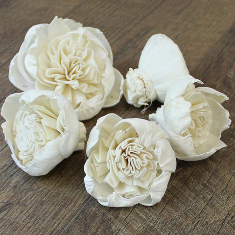 "Image of Garden Rose Special - 2.5"" - Wood Flowers Co."