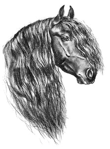 Friesian Head Decal