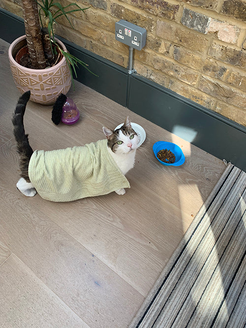 How to keep a cat cool in a heatwave. Cat wearing a cold tea towel. Catnap Design London.