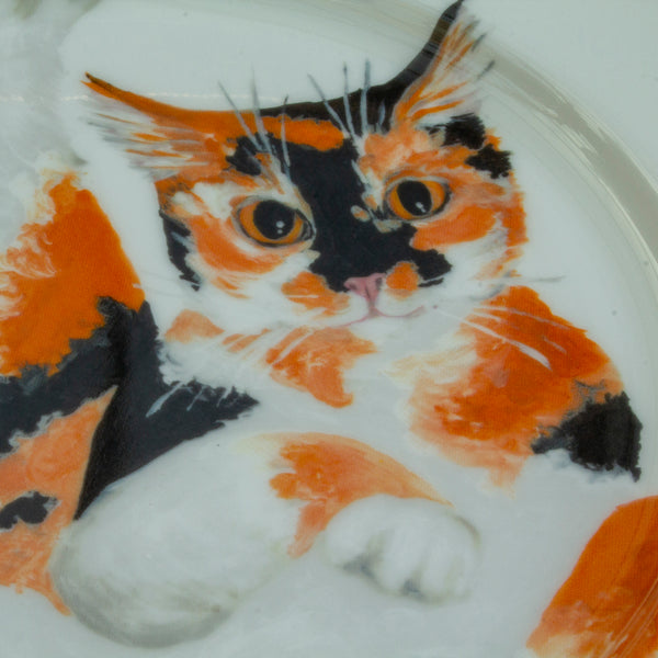 Oscar Curled Cat Set of 4 Plates (Edged)