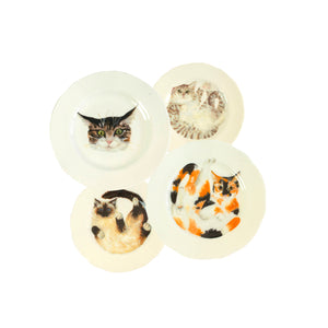d tabFour white china plates with two illustrated tabby cats, one tortoiseshell cat and one ragdoll cat illustrated on them. Mix and match dinner plates! - Ideal as decorative hanging plates Catnap Design London