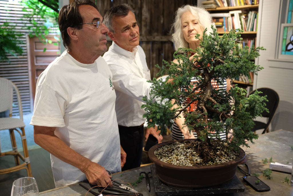 Simple Practical Bonsai Guidelines with Ryan Gugeler