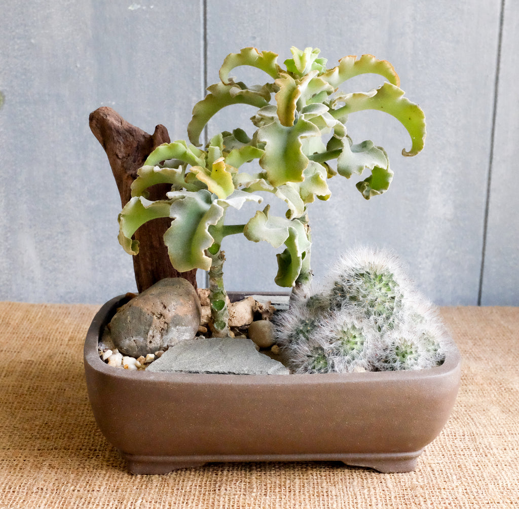 Small succulent and cactus planter. Michler's Florist, Greenhouses & Garden Design