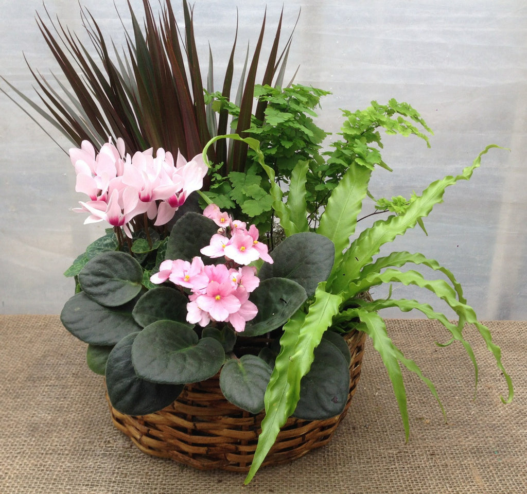 Bellaire Basket: Planter with Cyclamen, Violets, Birds Nest Fern, Dracaena, and Maiden Hair Fern | Michler's Florist