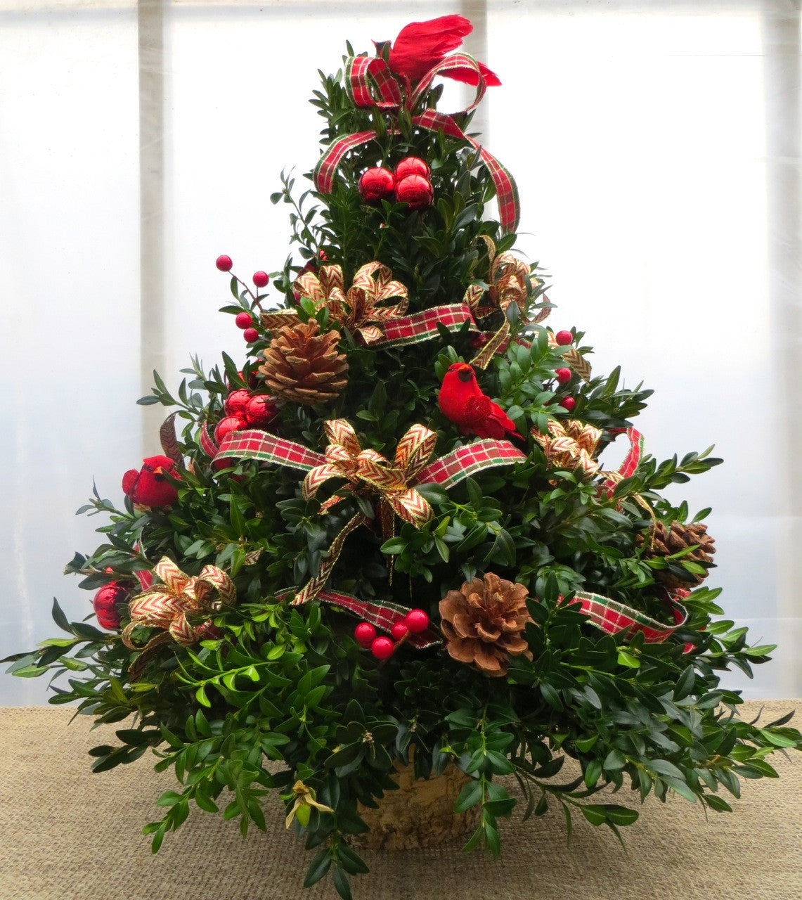 Sugar Plum Tree | Michler's Florist, Greenhouses & Garden Design ...
