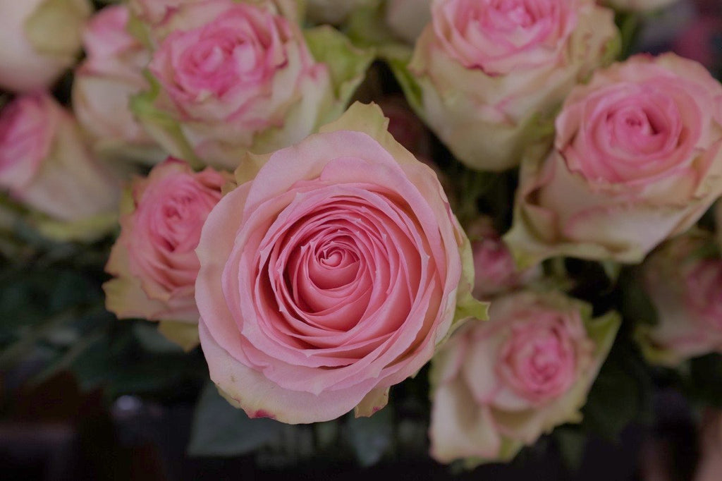 Pink Roses for Custom Rose Design in Lexington, KY by Michler's Florist