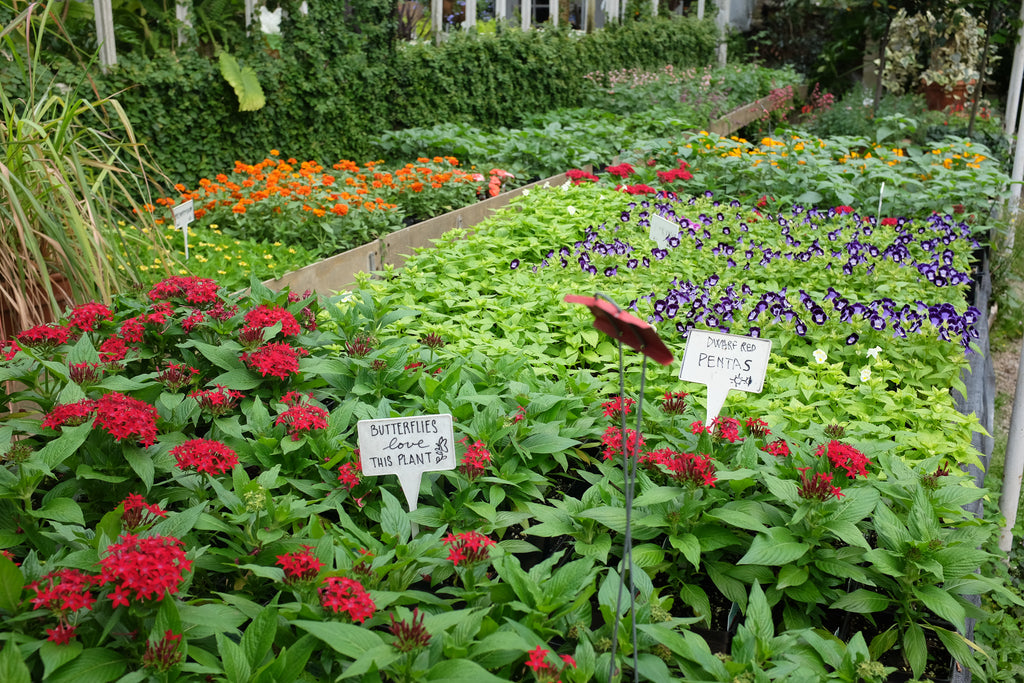 Annual Plant Mix Box (Michler's Pick)