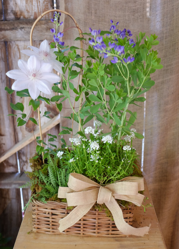 Perennial Basket by Michler's Florist with Clematis, baptisia, candy tuft, yarrow