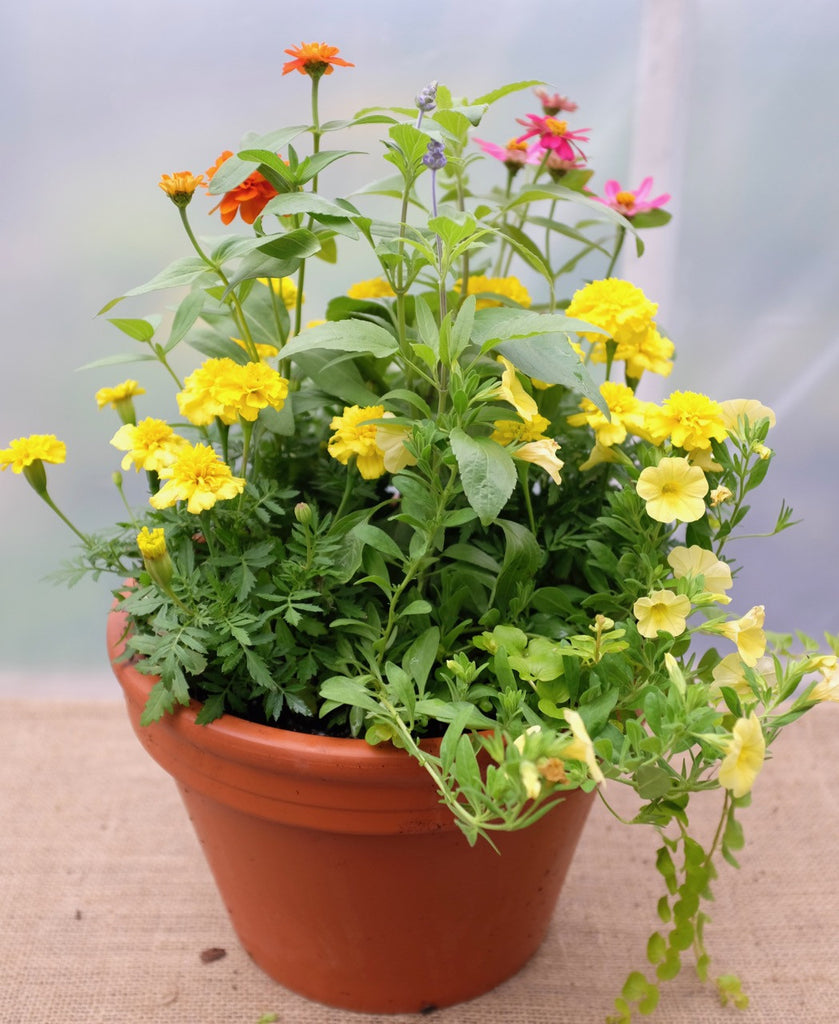 Annual Garden Basket with marigolds, zinnias, calibrochoa, salvia by Michler's Florist