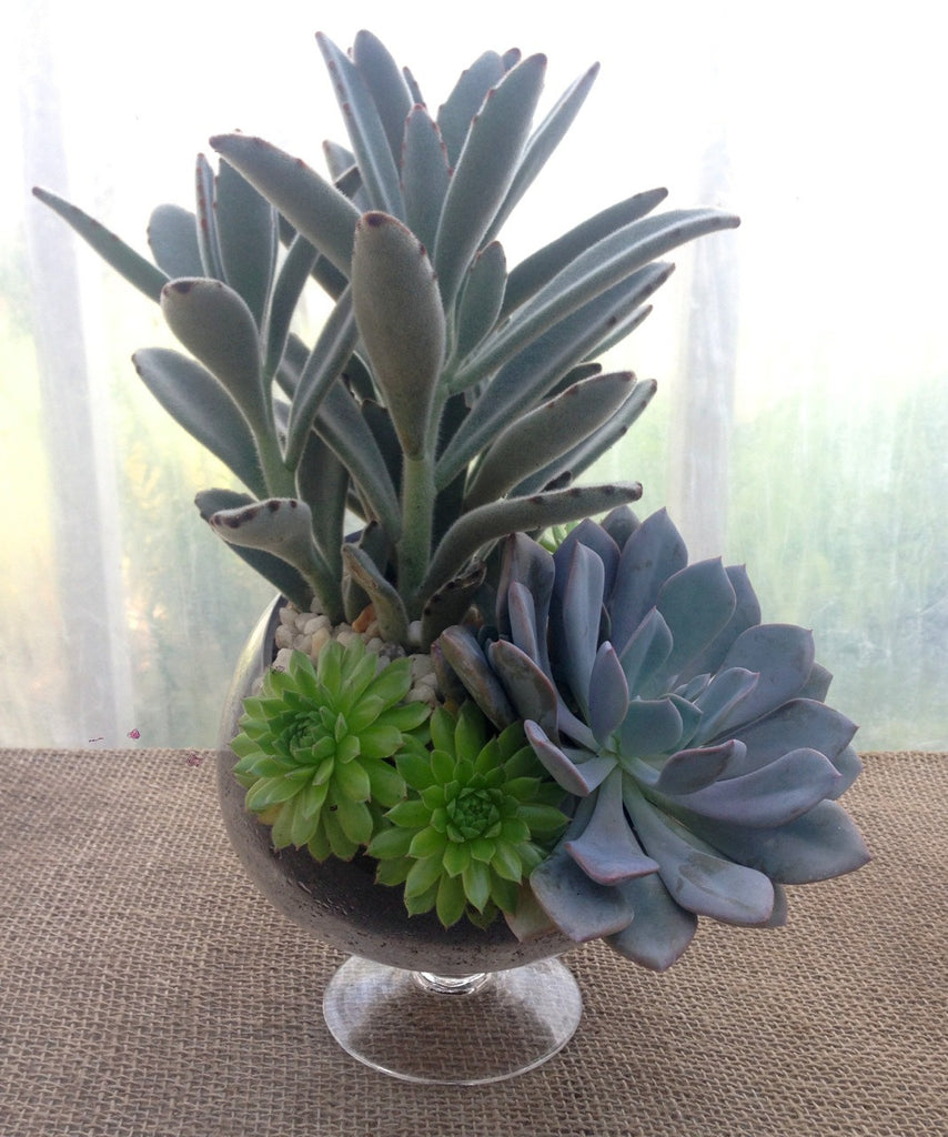 Succulent Planter in Glass Bowl at Michler's Florist in Lexington, KY