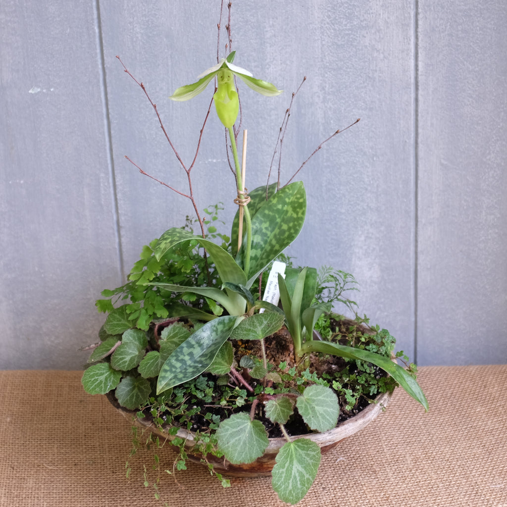 orchid planter with fern, strawberry begonia, and lady slipper orchid by Michler's
