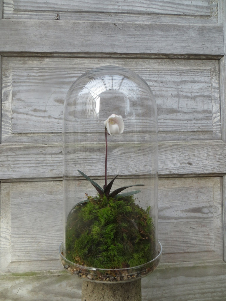 Landy Slipper Orchid Cloche at Michler's Florist in Lexington, KY