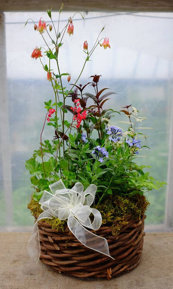 Perennial basket with columbine, penstemon, and phlox