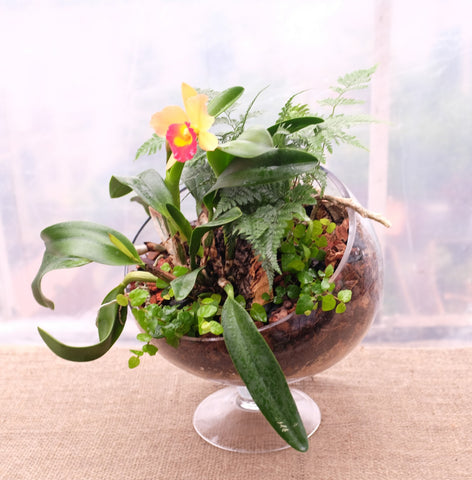 Orchid Bias Bowl