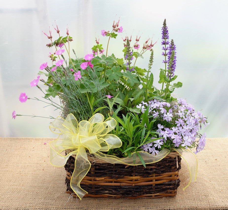 Perennial garden basket with creeping phlox, geranium, salvia by Michler's Florist