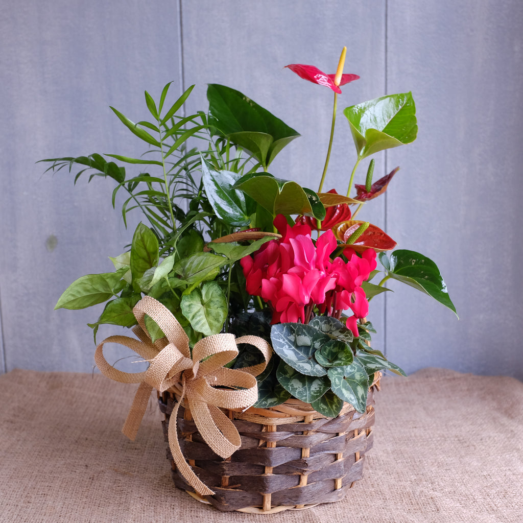 A basket of red blooming and foliage tropical plants
