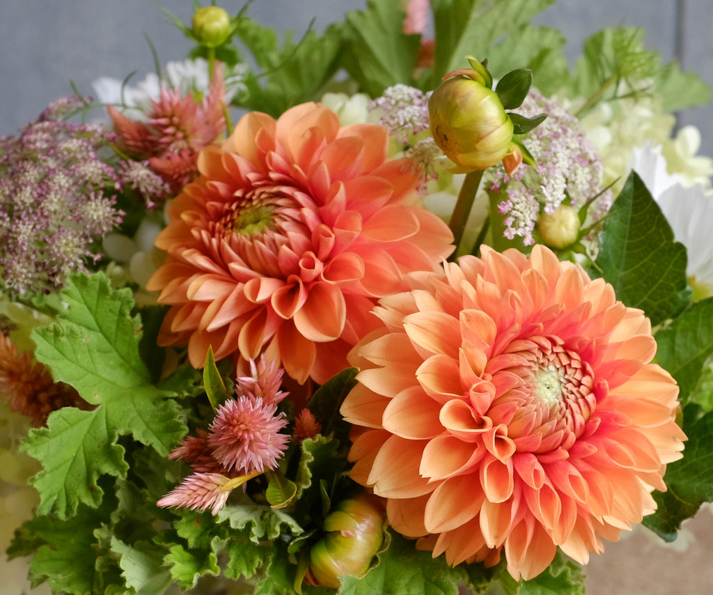 Custom Seasonal Dahlia Design