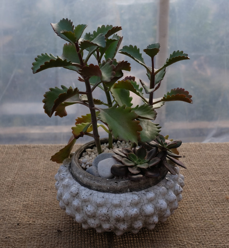 Succulent Planter in short knobby pot | Michler's Florist & Greenhouses