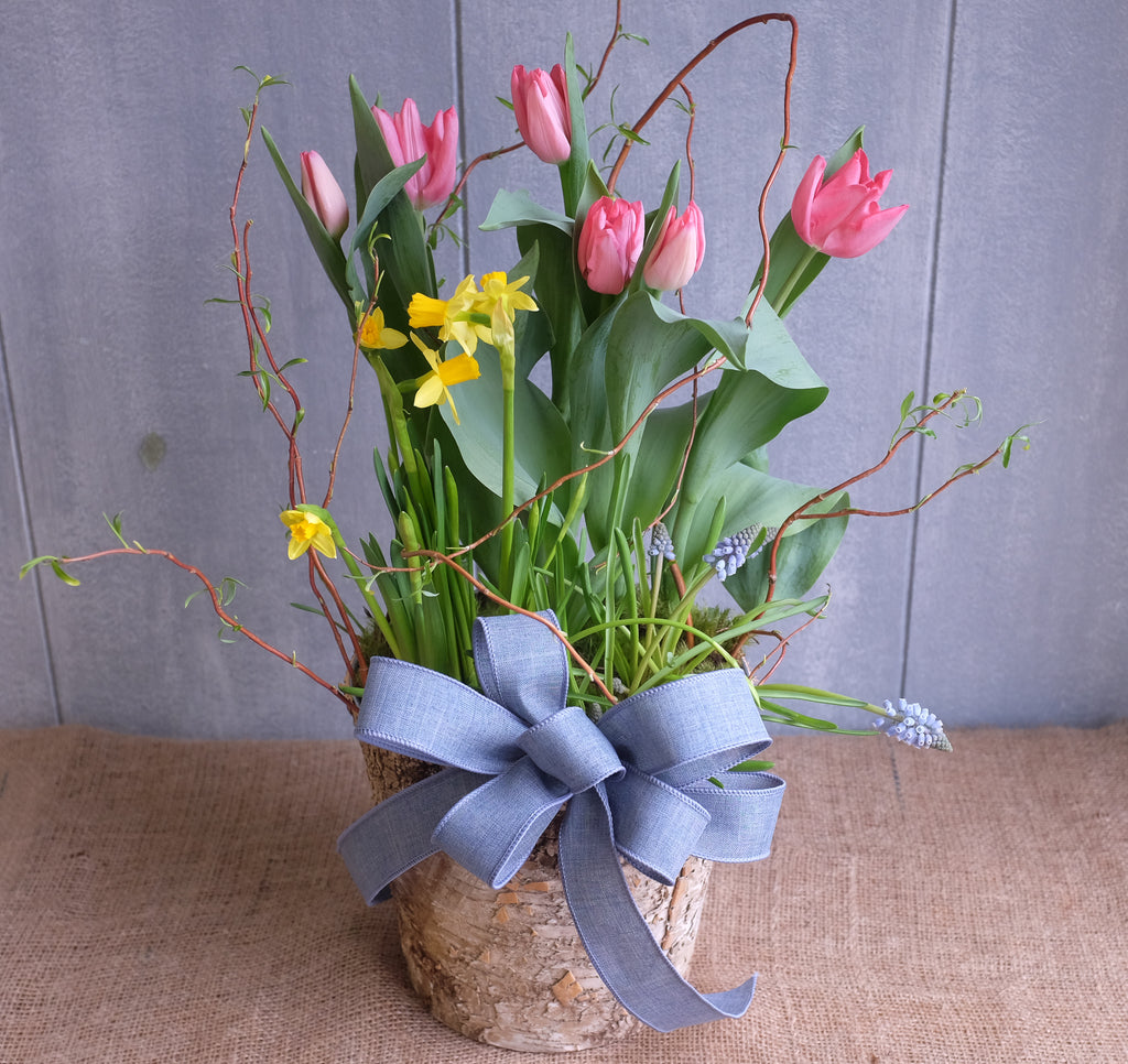 Blooming spring bulbs planted in birch bark container by Michler's Florist