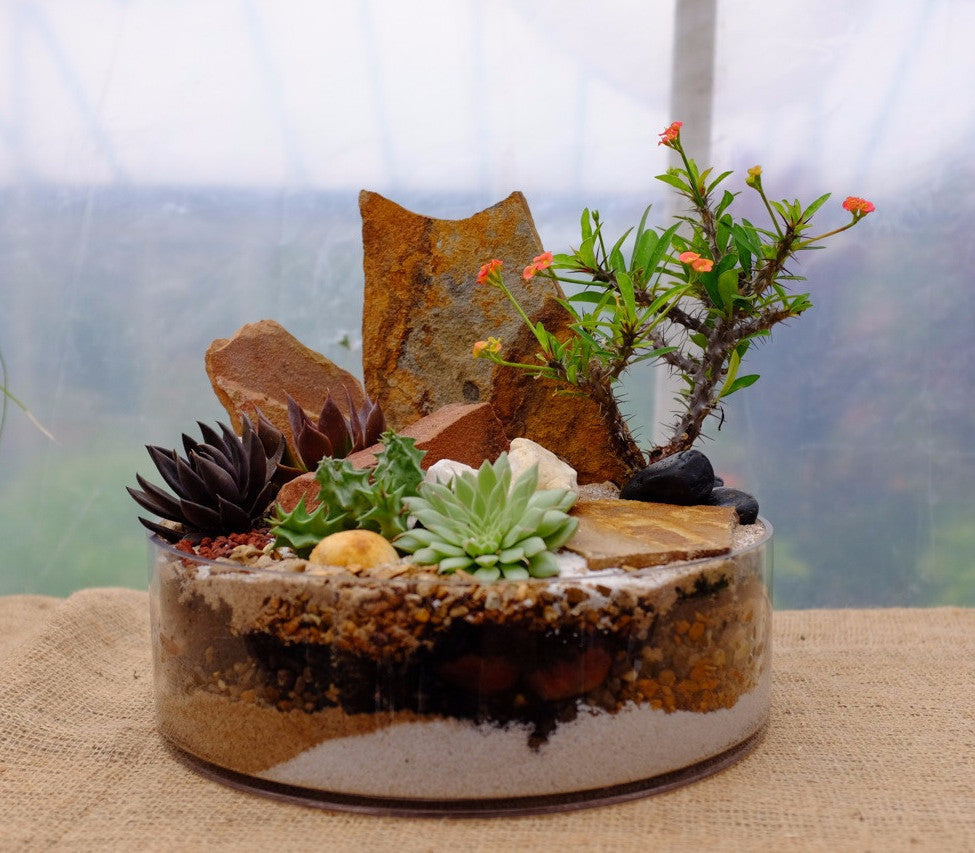Succulents and Crown of Thorns Planted with Rocks in Glass at Michler's Florist in Lexington, KY
