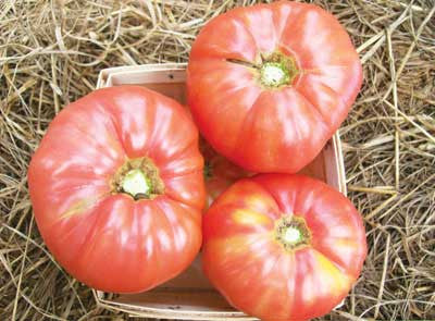 Tomato - Granny Cantrell's German Red/Pink