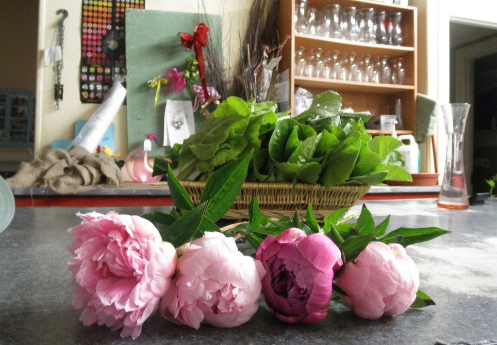 Pink peonies in bloom at Michler's Florist in Lexington, KY