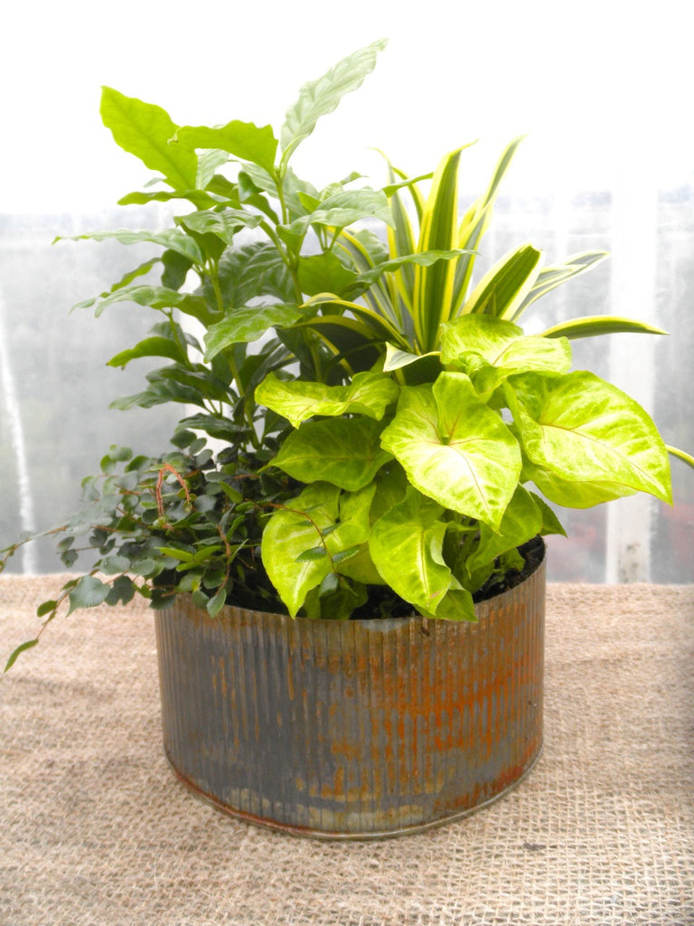 Metal Planter with House Plants | Michler's Florist