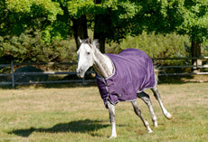 Shires Tempest Plus 200 Purple/White 72