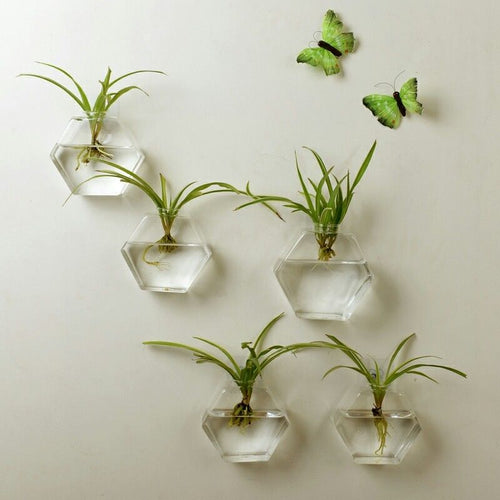 Pack Wall Hanging Plant Terrarium Glass Planter for Home Decor - Soldify